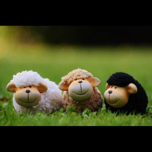 tre pecore (finte) con lana bianca, beige e nera