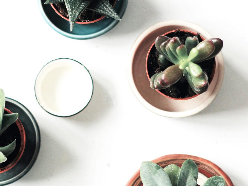 banner di contatto di piante succulente